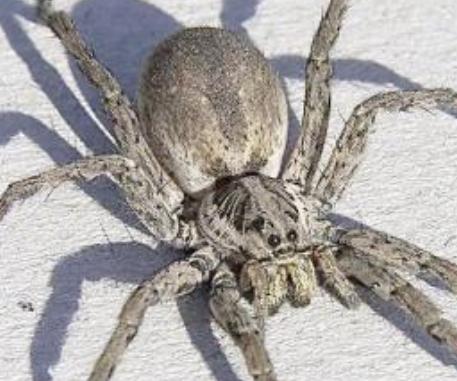 蜘蛛歷險記